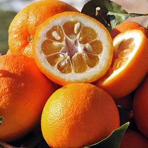 Laranja amarga (Citrus aurantium) 109